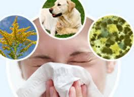 allergie3